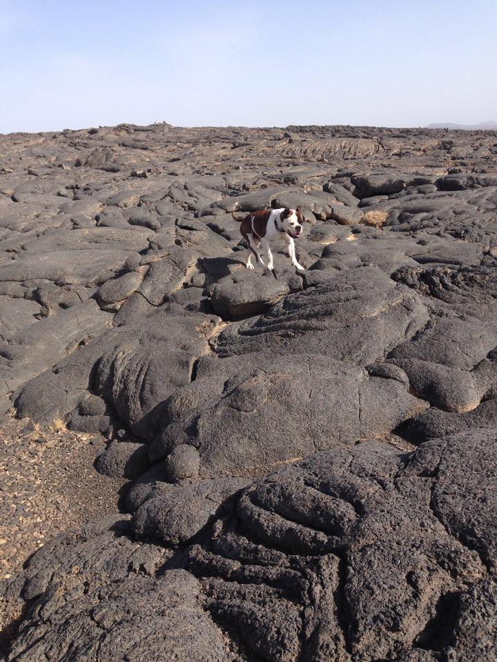 Casper with the lava formations